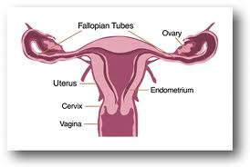 Different types of female infertility causes
